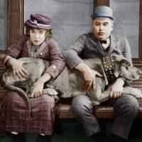 haveuheard pets ucf
