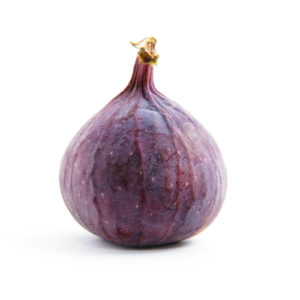 haveuheard fig fsu