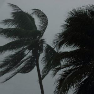 haveuheard hurricane usf