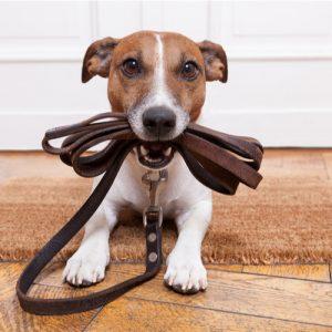 haveuheard pets uga