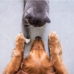haveuheard pets umd