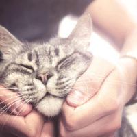 haveuheard pets usf