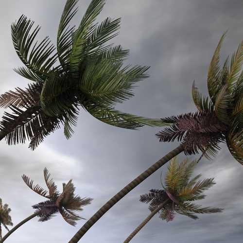 haveuheard storm uf