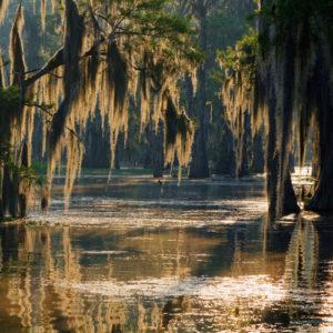 haveuheard swamp uf