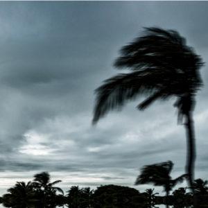haveuheard wind blows usf